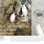Indonesian Blue Swimming Crab