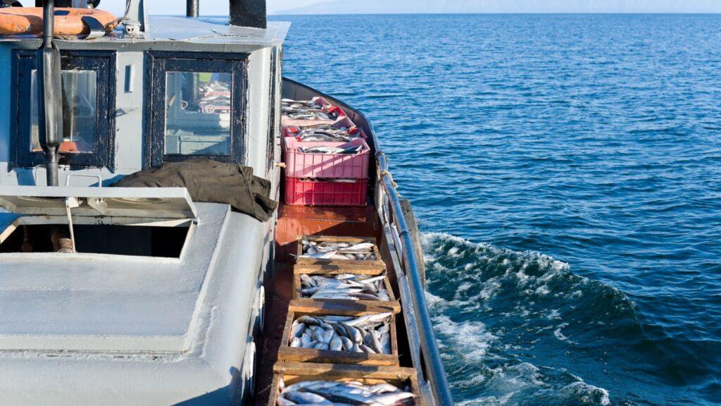 sustainable seadfood fund