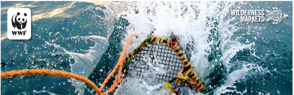 Fisheries Improvement Fund: WWF and Wilderness Markets